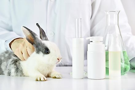 A rabbit being handled by a scientist for experimentation.