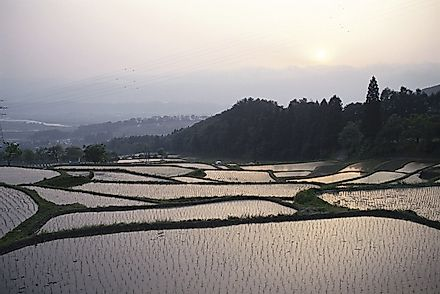 Terraced rice paddies in Japan.