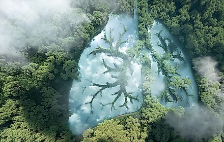 Tropical rainforests are the lungs of planet Earth. Image credit: Petrmalinak/Shutterstock.com