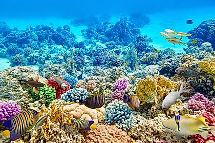 Coral reefs are vital marine ecosystems hosting a great diversity of species. Image credit: V_E/Shutterstock.com