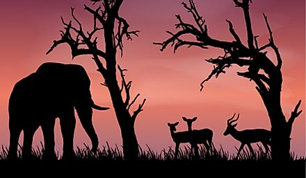 Africa is renown for its big game animals.