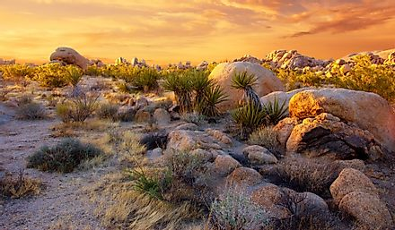 Joshua Tree National Park in the Mojave Desert.