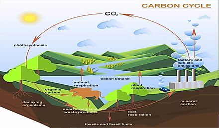 A pictorial representation of the carbon cycle.