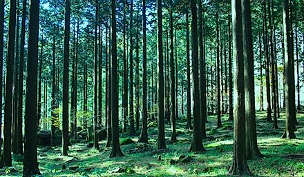 Forests in Japan have high quality and wide varieties of trees.