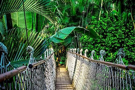A canopy walk through the species rich rainforest of the Amazon.