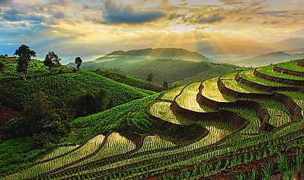 Terraced Rice Field in Chiangmai, Thailand. Image credit: Chatrawee Wiratgasem/Shutterstock.com