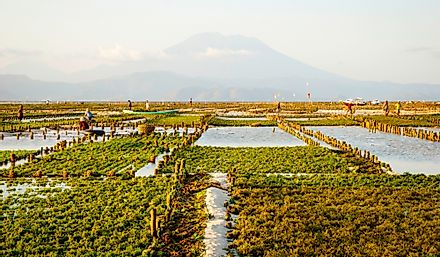 Algae farm in Nusa Lembongan, Indonesia.