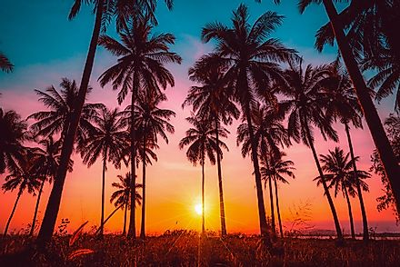 Palm trees come in various shapes and forms and can be found all around the globe.