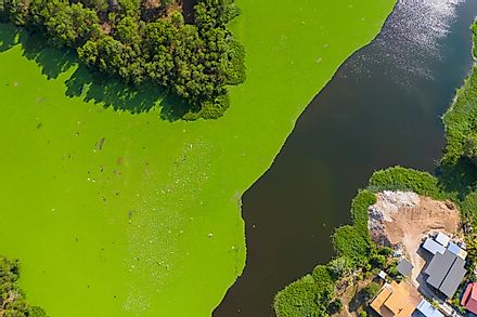 Eutrophication of a natural water body due to algal blooms. Image credit: Alen Thien/Shutterstock.com.