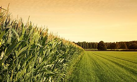 Corn is the largest agricultural crop in the United States, which produces roughly 350 million tons of the plant per year.