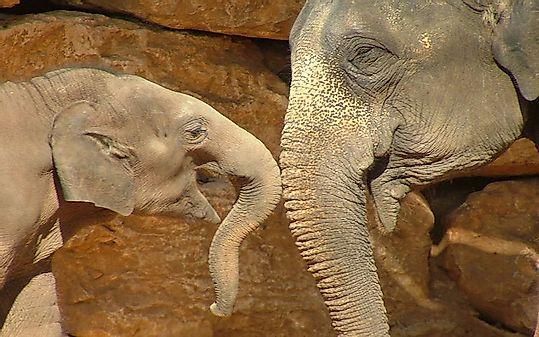 Animals With the Longest Gestation Times - WorldAtlas com