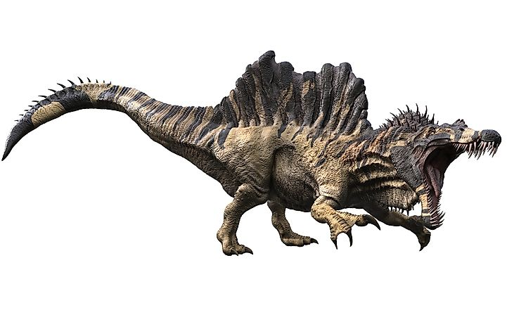 Spinosaurus spent much of its time in the water where it hunted for food.