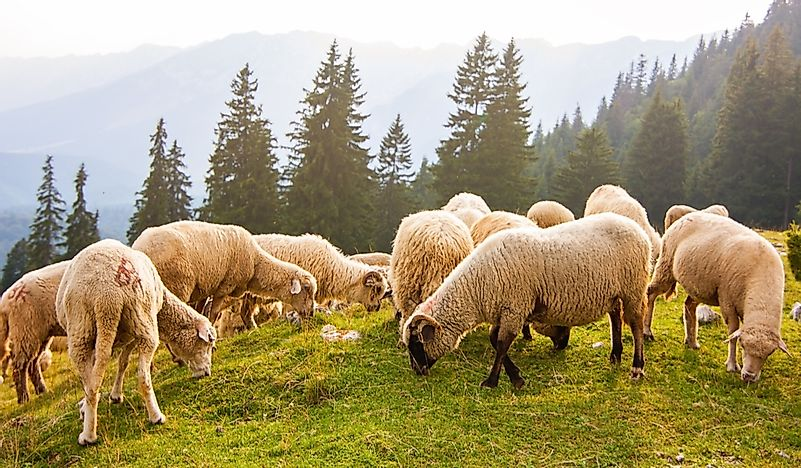 What Is Transhumance?