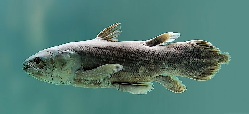 Native Fish Of Madagascar