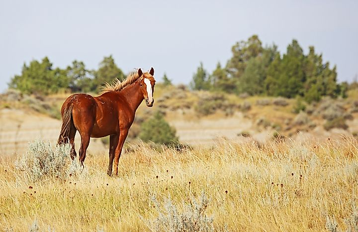 Mustang facts animals of north america for Interesting facts north america