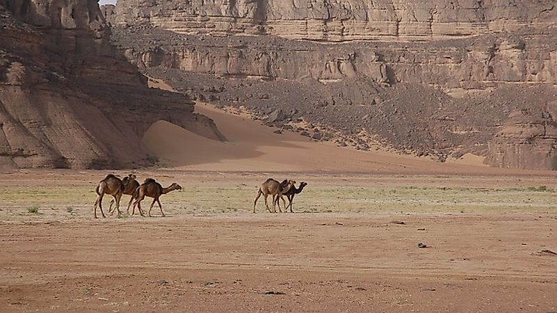 What Animals Live In The Sahara Desert