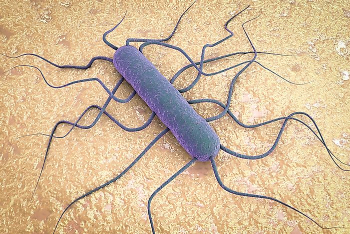 What Is Listeria?