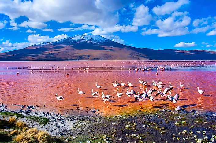 #9 Lake Colorada, Bolivia