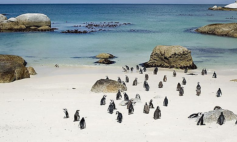 #3 Boulders Beach, South Africa -