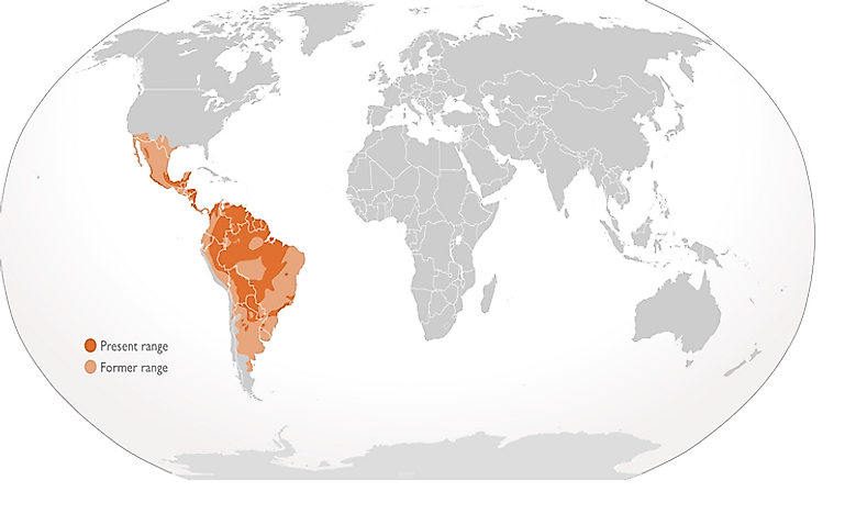 #5 Countries Where Jaguars Live -