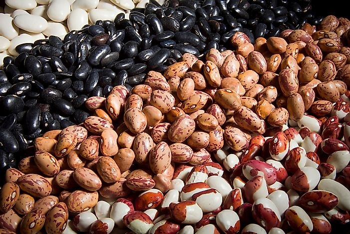 The World's Top Dry Bean Producing Countries