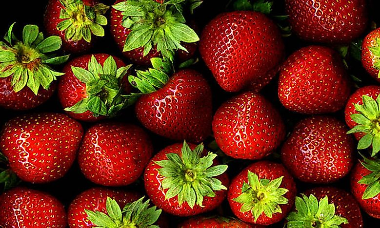 Which Countries Are The Leading Producers Of Strawberries In The World?