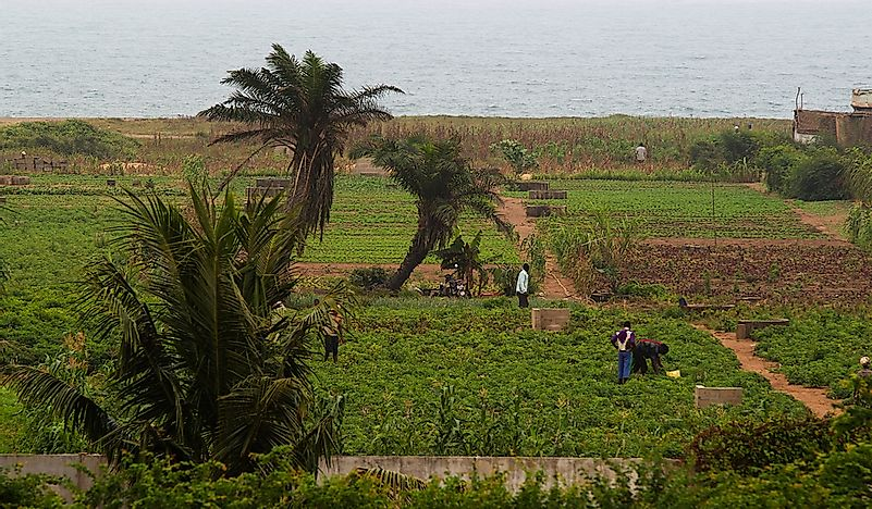 What Are The Biggest Industries In Togo? - WorldAtlas com