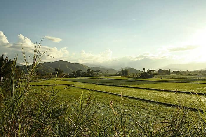 Rice terraces in the Philippines.