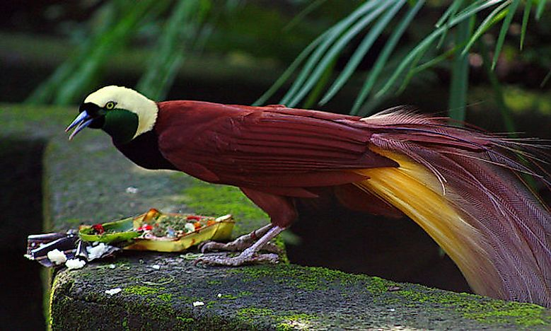 #10 Greater bird-of-paradise -