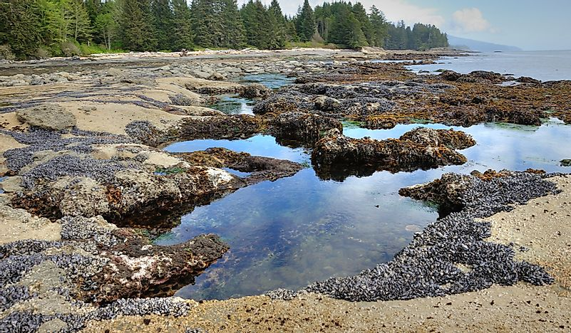 What Is a Tide Pool?
