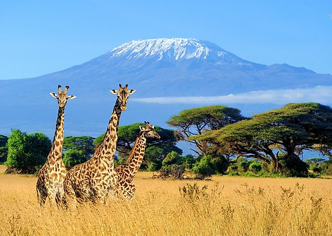 Mount Kilimanjaro is found in East Africa.