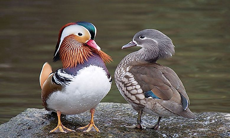 Most Colorful Birds From Around The World Worldatlas Com