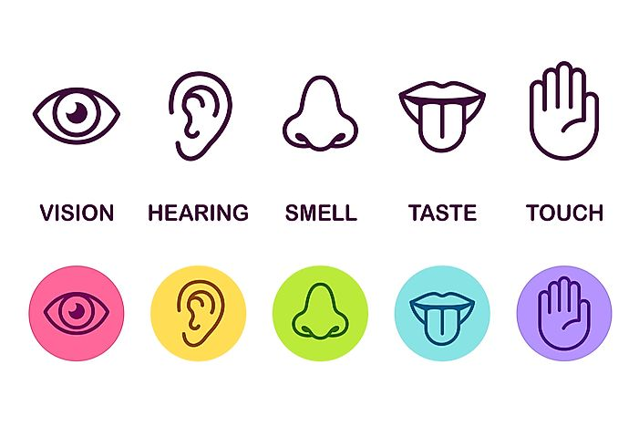 What Are the Six Human Senses?