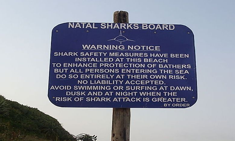 Shark Attacks In South Africa