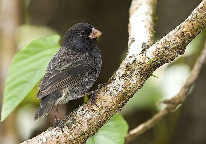 Darwin's Finches - RIT - People