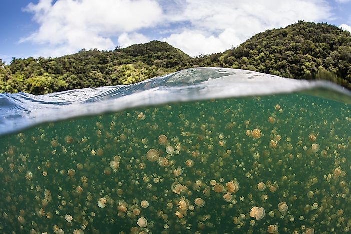 #10 Jellyfish Lake, Palau