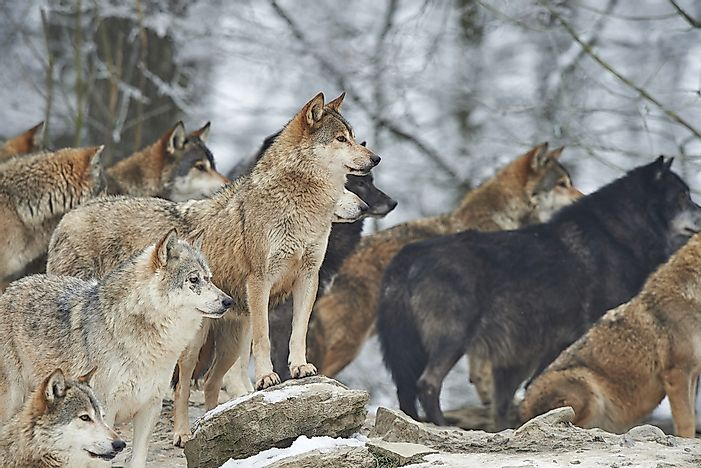 The Pack Animals Of The Different Regions Of The World