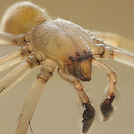 9 Of The Deadliest Spiders In The World