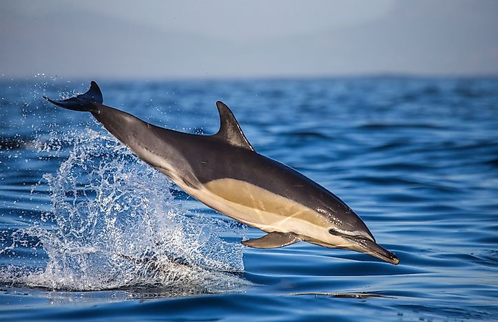 A dolphin off the coast of South Africa.