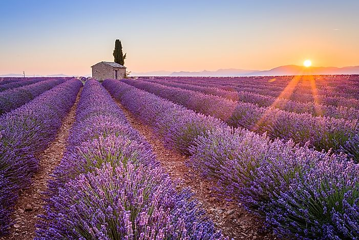 #12 Lavender Fields of Provence, France