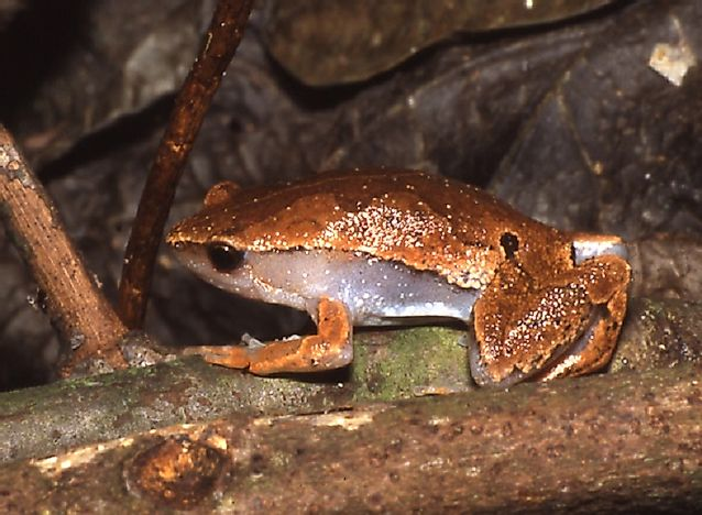 Amphibian Species Of Ecuador