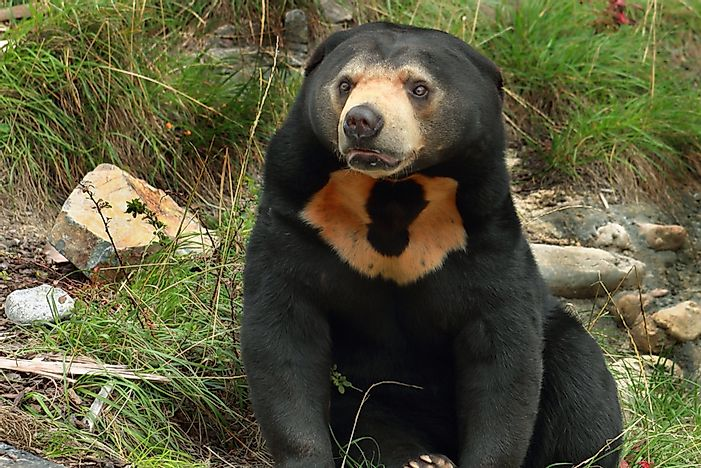 What Are The Largest Bear Species?