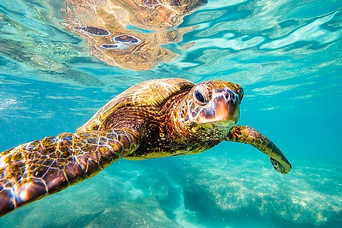 What and When is World Turtle Day?