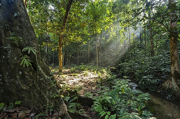 The forest surrounding the Kanching Falls in Malaysia.