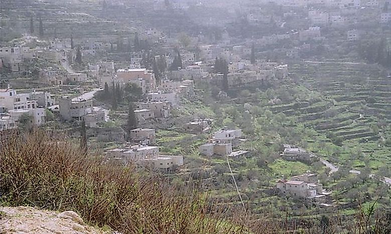 Land Of Olives - Battir Groves And Vineyards Of Palestine