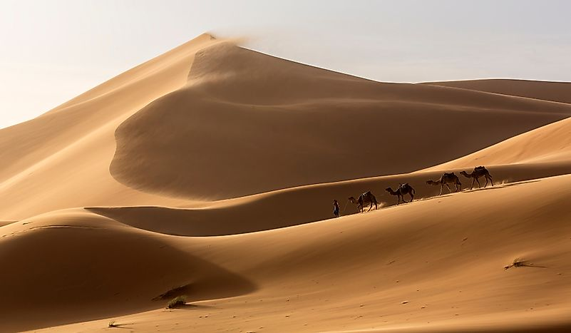 What  Animals Live In The Sahara Desert?