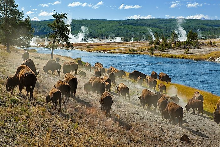 #5 Yellowstone National Park