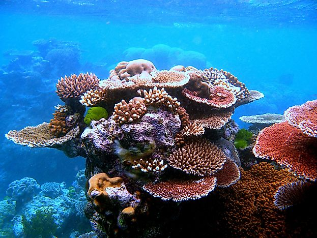 What Are Corals And Why Are They Important?