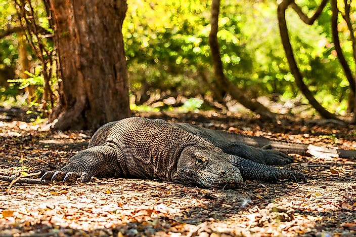#7 Komodo National Park, Indonesia