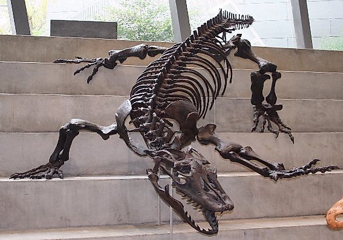 Megalania - The Largest Terrestrial Lizard That Ever Existed